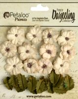 Petaloo Darjeeling Petites x 24 - Teastained Cream