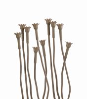 We R Memory Keepers Flower Stem Kit - We R - Stick Brown (10 Stems)