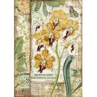 Stamperia A4 Rice paper packed - Amazonia orchid