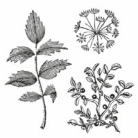 Stamperia HD Natural Rubber Stamp cm. 10x10 Herbarium